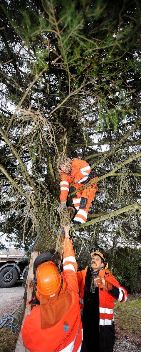 HØYTSVEVENDE: - Bedre å klatre i treet, enn å stå i en lift, sier Anne Humborstad. Seks meter over bakken, mens hun fester en stropp til treet.