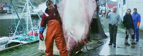 Tom Richard Kristiansen fra Talvik fikk et minne for livet da han dro ombord en kveite på 314 kilo utenfor Sørøya lørdag.