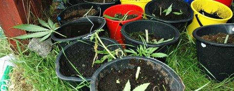 ØNSKER LEGALISERING: Foreningen for human narkotikapolitikk ønsker en legaliseringsdebatt hjertelig velkommen. Bildet er av et cannabis-beslag i Marker tidligere i år.