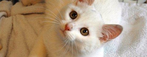 HVEM EIER MEG? Oppholdet i motorrommet på en bil har ikke påført denne lille kattungen skader. Men hvem er eieren???