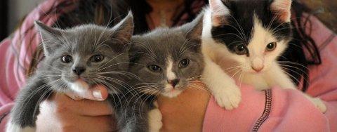 NYE HJEM: Dyrebeskyttelsen Ringerike fikk mange henvendelser fra folk som ville ta seg av de dumpede kattungene.
