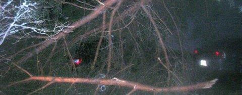 I Balders vei i Heradsbygda veltet et tre over en bil.