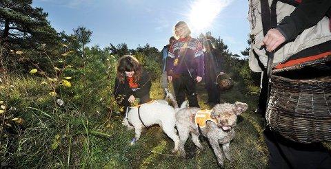 NESE FOR TRØFFEL: Italia og Frankrike er trøffellandene fremfor noen. Der trener en ofte opp griser og hunder til å lukte seg frem til de underjordiske godbitene.