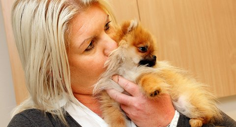 ? BLE LURT: Lene Hess i Porsgrunn trodde hun hadde kjøpt en ekte Pomeranianhund. Men nå viser det seg at opplysningene om Mercedes i stamtavlen ikke stemmer overens med blodprøveanalysen.