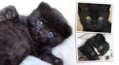 Sofie, Domino og Desibel ble alle funnet dumpet onsdag. Dyrebeskyttelsen trenger hjem til de tre små nøstene.