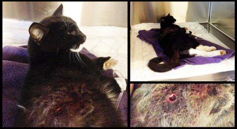 Katten Purrina ble funnet lørdag morgen liggende sammenkrøllet under en bil. Katten var skutt med luftvåpen. Mandag døde den av skadene.