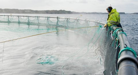 Med riktige grep i dag kan vi sikre en mangedobling i sjømatnæringen i årene som kommer, skriver Ove Trellevik.