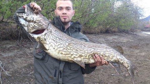 Ståle Vollan vant med denne gjeddefangsten på 11,5 kilo.