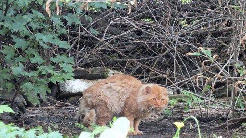 Hjemløs: Både i Narvik og i distriktene rundt er det flere hundretalls hjemløse katter, anslår den lokale Dyrebeskyttelsen.