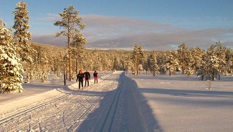 Vakkert og deilig! Mange skiløpere benyttet finværet til en skitur i Inga-låmi løypa.