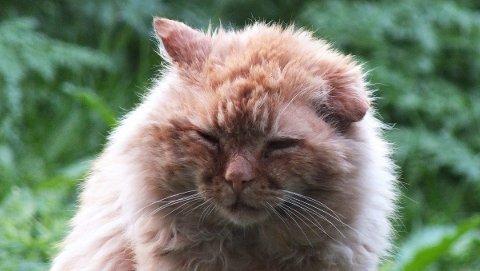 Mange lider: Mange av de hjemløse kattene lider, og vil nok ikke klare seg gjennom vinteren. ? Vi vet mange vil fryse i hjel, sier Munkli.