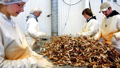 Jana Niclaus (fra venstre), Lise Ripnes, Thomas Haugerud og Robert Schütt arbeider på Kongehaug krabbe på Smøla i sommer.