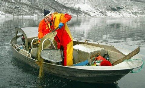 STORTORSK Asle Tveitnes og Hans Erik Olsen drar stor torske opp av Kåfjorden. Samerettsutvalget skal nå vurdere om dette er en eksklusiv rettighet for innbyggerne langs denne og andre sjøsamiske fjordarmer.