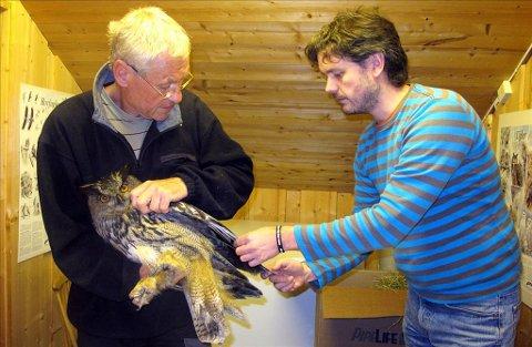 Redningsaksjon: Jo Heggset (til høyre) overrekker hubroen til en annen fugleekspert, Helge Grønlien på Lillehammer. Men den omfattende redningsaksjonen for å få hubroen ut i naturen igjen, hjalp ikke. Foto: Marita Sæter