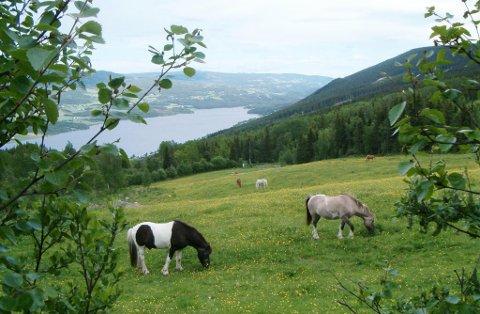 Norges Bygdeungdomslag  meiner faglaga bør bryte jordbruksforhandlingane.