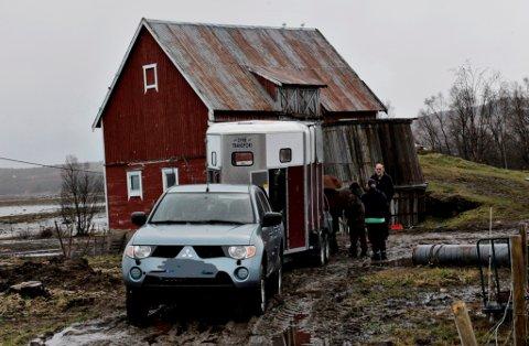 Flere hester fra omstridte Bunes gård ble hentet og fraktet bort.