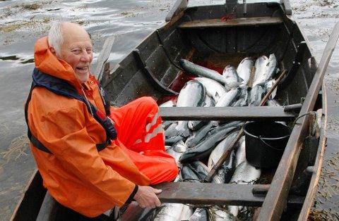 Ola Almvik (73) har i sommer fisket mye, mye mer laks alene med kilenota si i Sunndalsfjorden enn alle laksefiskere i Driva til sammen.