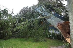TRE I HUS: En bøk falt over et hus i Porsgrunn søndag morgen. Ingen person ble skadd, men huset ble slått skeivt.