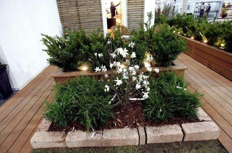 I GRUPPER: Darren Saines planter gjerne fem eller flere like planter i grupper. Det skaper et ryddig inntrykk. Tenk visuell dybde når du planlegger.