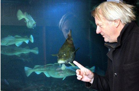 Dag Kajander  hilser på  torsk i Lofotakavriet. Torsken er modell for heltene i  barneboka  «Kod og Tod svømmer videre».