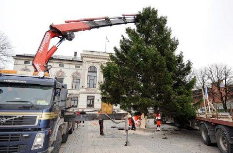 PÅ PLASS: Etter flere timer med venting, kaving og transport er juletreet trygt plassert på rådhusplassen. - En så stor plass tåler en slik størrelse på treet, sier Anne Humborstad.