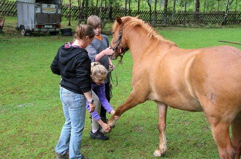 Bakketrening med hest.