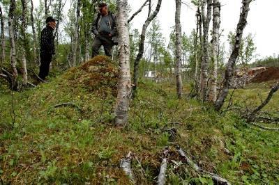 Denne lille haugen kan være ei samisk gamme som er minst 100 år gammel. Den kan i så fall stoppe Umskartunnelen  - hvis området blir berørt av arbeidet. Foto: Klaus Solbakken
