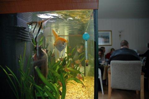Svømmedyktig. Mens de små svømmer rundt i sitt lille basseng, holder akvaristene møte.