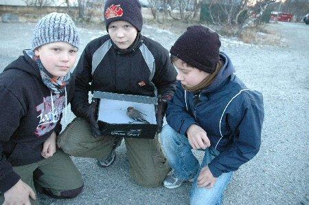 Fra venstre: Joakim Jessen Eilertsen, Pål-Sander Mathisen og Kay-Roger Korslund prøver så godt de kan å ta vare på fuglen de fant. - Kanskje den overlever og kan bli en fri fugl igjen, sier dem.