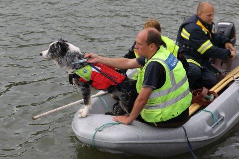 FUNN:?Redningshunden Hio, med hundefører Rolf Garholm ved sin side, har deltatt på over 100 søk etter savnede. Fredag markerte han hvor den 25-åringen lå i Vorma. FOTO: NORSKE REDNINGSHUNDER