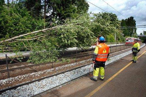 LAMMET LANDET: I tillegg til å stoppe togtrafikken ødela dette treet mobilnettet for store deler av landet.