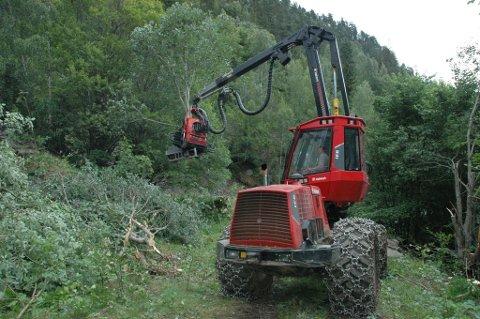 Denne skogsmaskinen tar unna vegetasjonen før gravemaskiner entrer anleggsområdet.