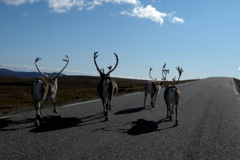 NRK satser stort på en ny naturfilmserie.