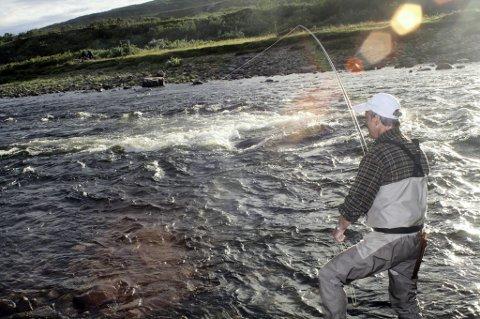 I følge Statistisk Sentralbyrå gikk fangsten av elvelaks ned i Finnmark i 2011.