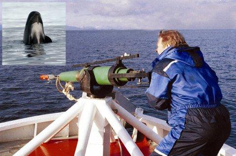 ADOPTER EN HVAL: Amerikanske forskere ønsker å kjøpe hvalen fri.