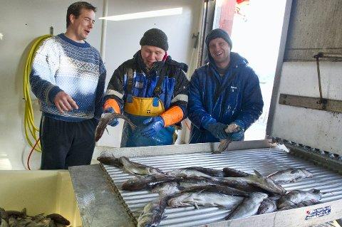 """I LAND: Medregnet dagens leveranse, har """"Inger-Victoria"""" landet 300 tonn hyse. Skipper Kjetil Guttormsen, Tonis Tilk og Gints Ezis har all grunn til å være fornøyde."""