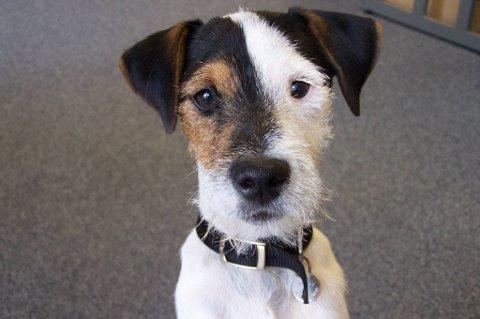 En hund av denne typen ble kidnappet forrige uke i Lebesby.