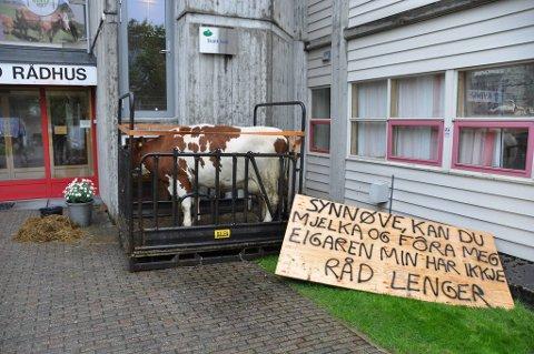 Kua som i morgontimane i dag stod utanfor rådhuset og venta på at Kvinnherad-ordfører Synnøve Solbakken (Ap) skulle koma og mjølka ho, er no fjerna.