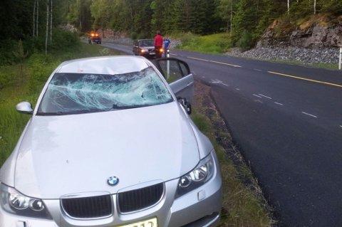 KOLLIDERTE MED ELG: En bil kolliderte onsdag kveld med en elg i like ved Krogstaddalen på riksvei 170 ved Heia. ALLE FOTO: RAYMOND AASERUD