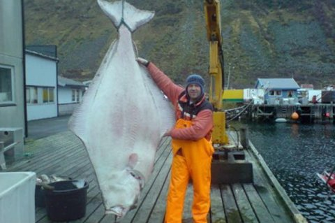 2006: Denne kveita på 208 kilo ble tatt høsten 2006.