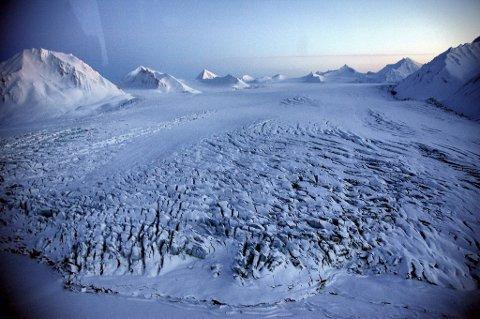 Sysselmannen vil ha aktsom ferdsel og guider på Svalbard.