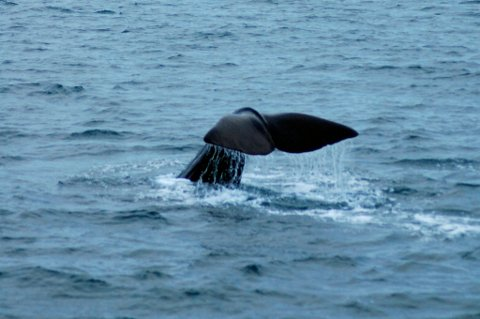 Sørkoreanerne har tidligere vist til en betydelig vekst i hvalbestanden i sine kystfarvann som en årsak til at forskningsfangsten skulle gjenopptas.