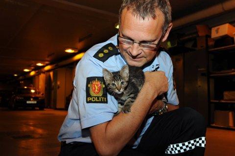 Titt tei, hvem savner meg? Hvis noen savner eller vil overta kattungen må de snarest ringe politiet på 02800 og be om politivakta i Narvik.
