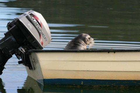 KAPTEIN: Selen trivdes i båten, og gikk flere ganger ned i vannet og opp igjen.