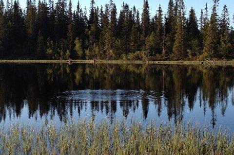 Statsskog sliter med fulle fiskevann. Her vaker fisken i Lille Byringstjernet i Rendalen i Hedmark.