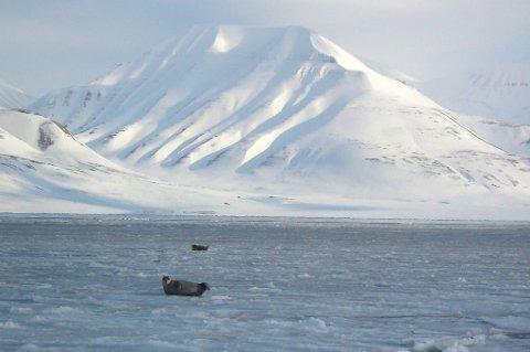 En kvinne i 40-årene omkom tirsdag under sightseeing på Esmarkbreen på Svalbard.
