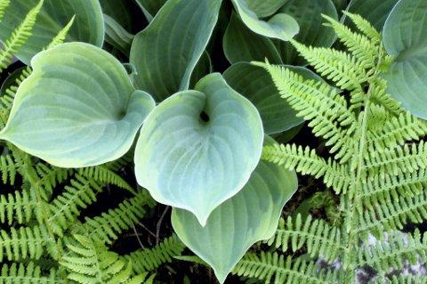 Siste - Planter i skyggen
