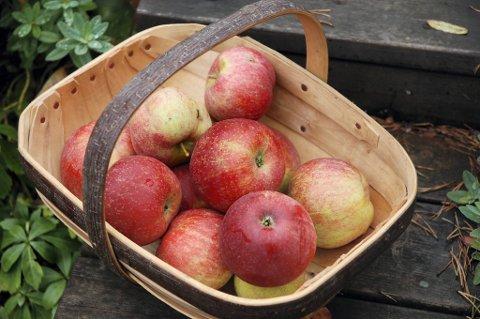 Fine, selvhøstede Aroma-epler.