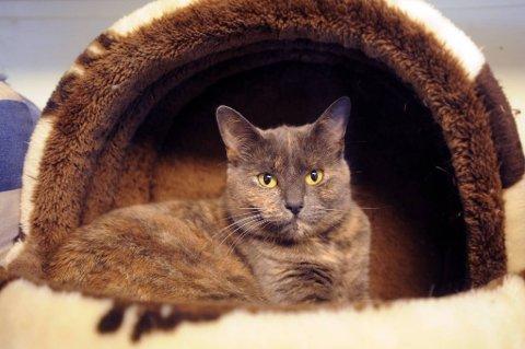 Leiligheten i et borettslag hadde blitt brukt til katteoppdrett i 25 år, og på det meste har det vært 30 katter der, ifølge dommen. Illustrasjonsfoto.