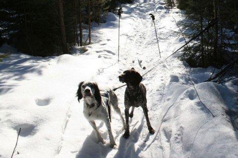 VAR PÅ TUR: Her er hundene Henry hadde med seg på skitur da ulven dukket opp. FOTO: PRIVAT